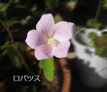 a0143388_11421383.jpg