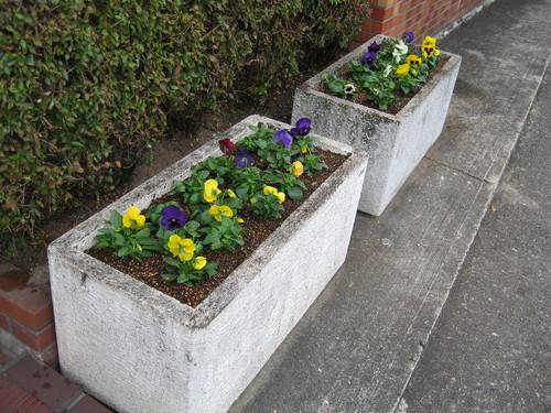 お花の植え替え♪_f0237698_14581449.jpg