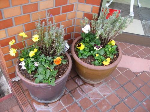 お花の植え替え♪_f0237698_14582599.jpg