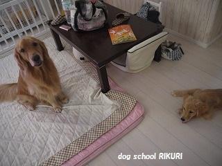 ご近所に♡_a0284100_1512458.jpg