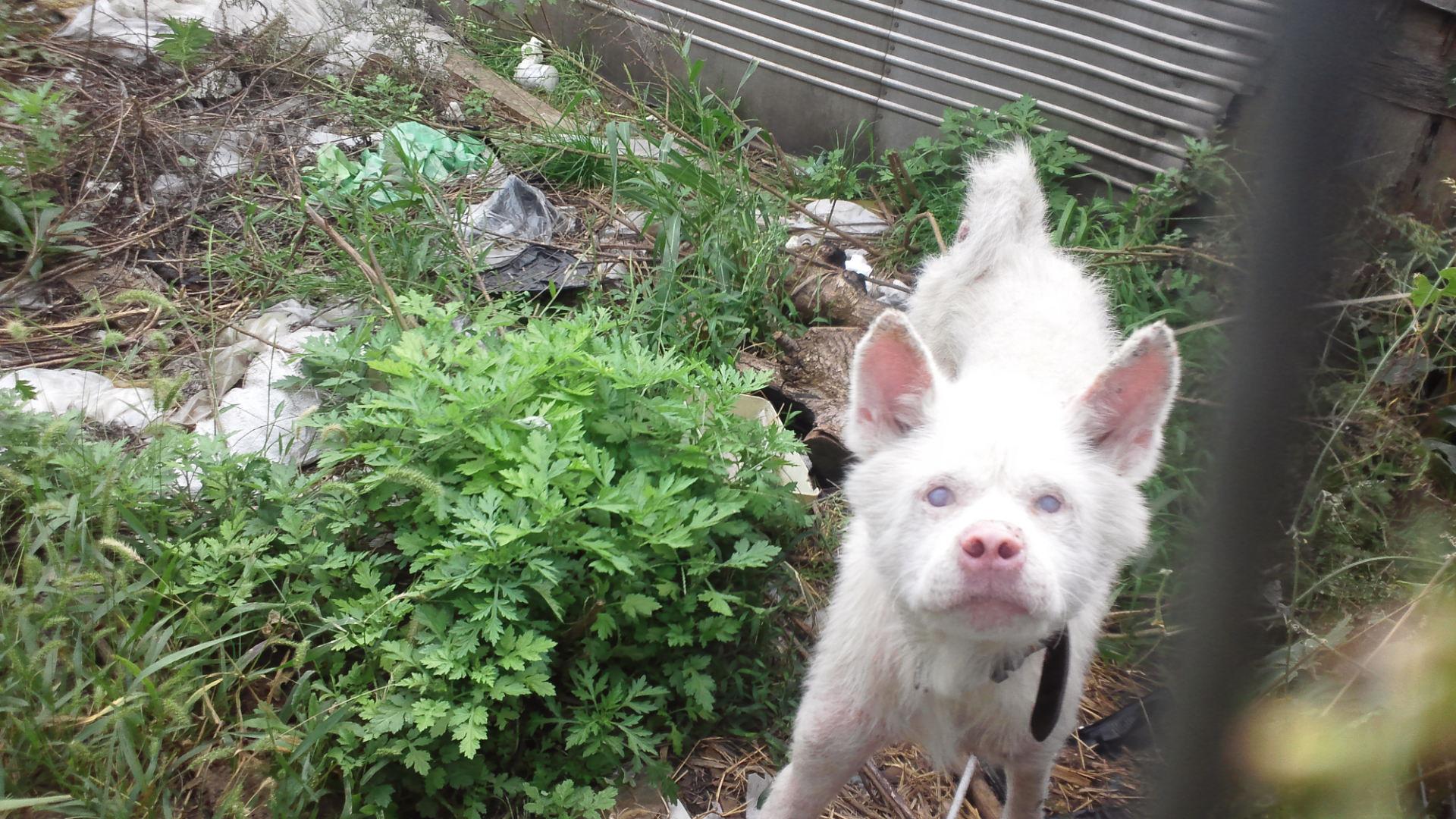 秋田犬のあっきぃ&いち_f0242002_20383534.jpg
