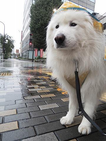 今朝は雨_c0062832_8344623.jpg