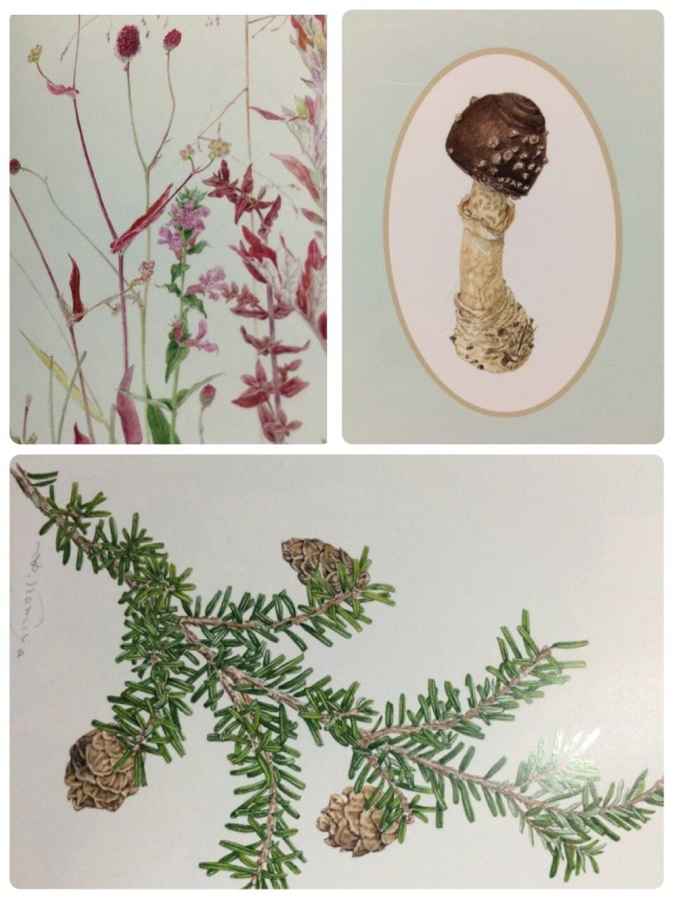 Botanical Art 個展_c0206645_22023859.jpg