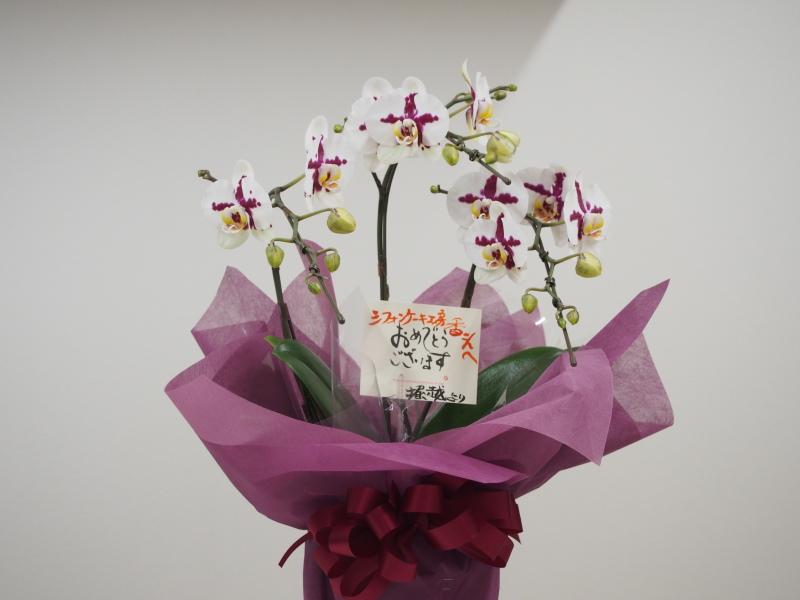またまたお花を(^ー^* )_c0331357_18095433.jpg