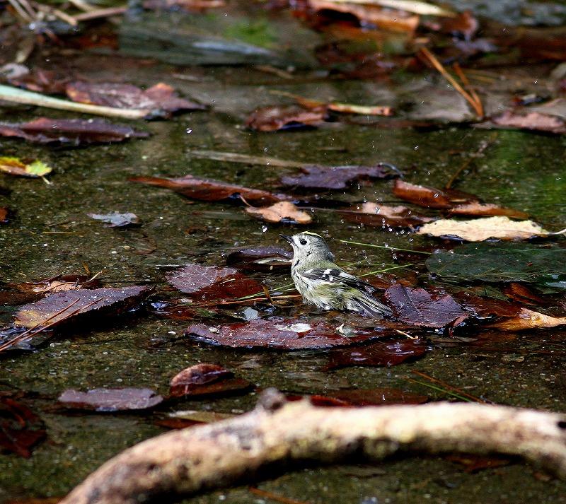 秋のヘグラ島への遠征(5)・・・_c0213607_18454669.jpg