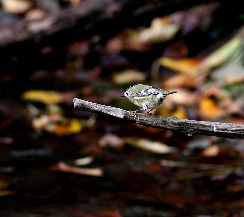 秋のヘグラ島への遠征(5)・・・_c0213607_18454685.jpg