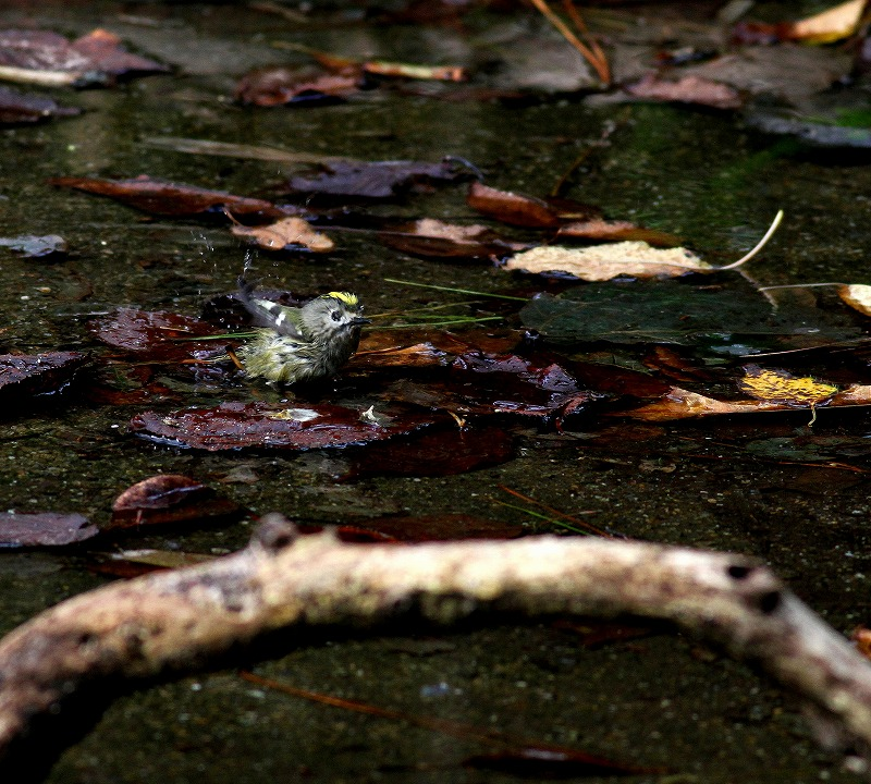 秋のヘグラ島への遠征(5)・・・_c0213607_18460977.jpg