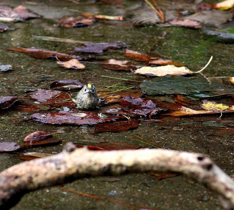 秋のヘグラ島への遠征(5)・・・_c0213607_18460999.jpg