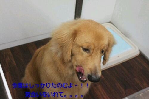 b0130018_22493938.jpg