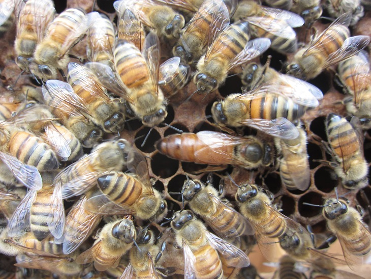 ミツバチを飼って思うこと_d0155439_2132599.jpg
