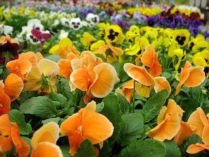 冬を楽しむ花でいっぱい!_c0141652_13115960.jpg