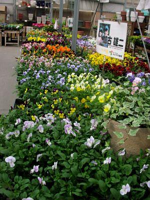 冬を楽しむ花でいっぱい!_c0141652_13121380.jpg