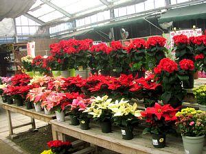 冬を楽しむ花でいっぱい!_c0141652_13122113.jpg