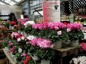 冬を楽しむ花でいっぱい!_c0141652_13122647.jpg