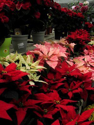 冬を楽しむ花でいっぱい!_c0141652_13123251.jpg