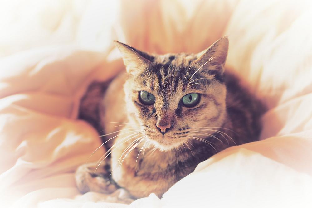 猫にゃん_f0021869_23544797.jpg