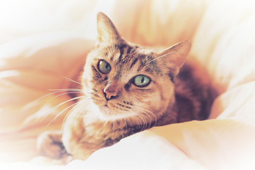 猫にゃん_f0021869_23553064.jpg