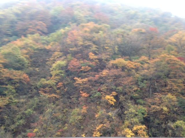 11月1日 来ましたぜ、りんご狩り!_d0171384_17234438.jpg