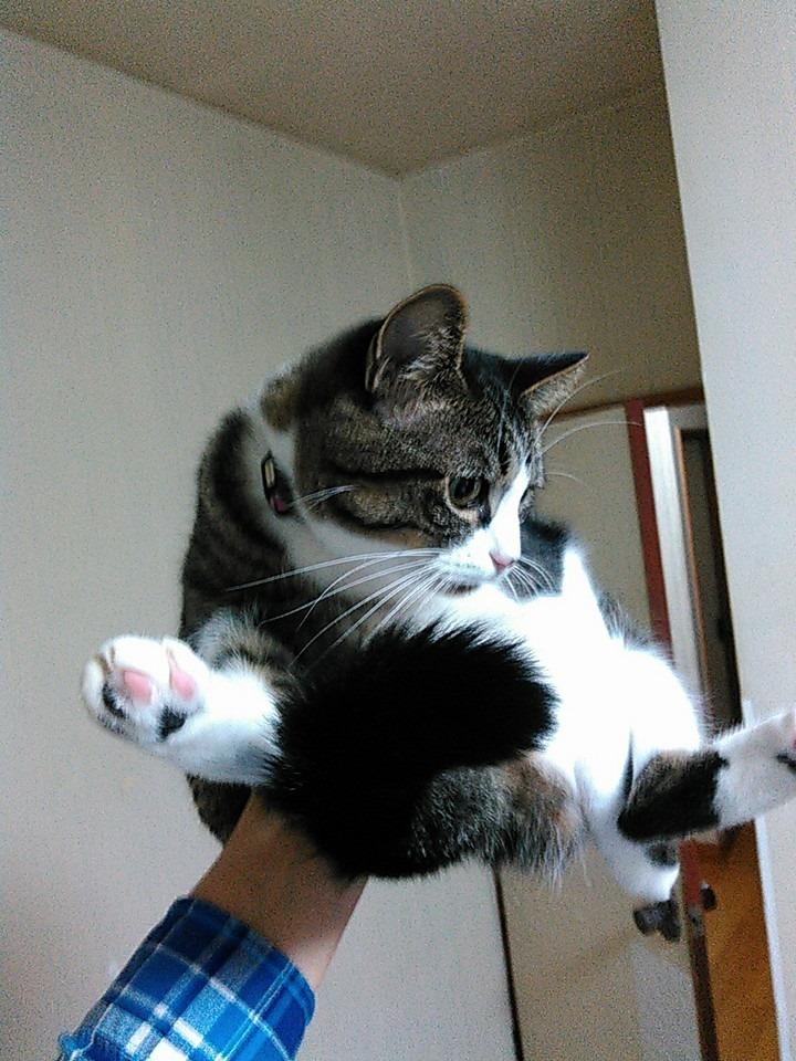 【猫】手乗り_f0141609_23183825.jpg