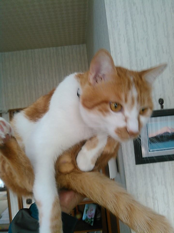 【猫】手乗り_f0141609_23183914.jpg