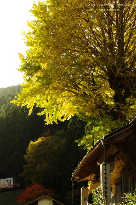 銀杏の樹のたもとを_d0309612_23203361.jpg