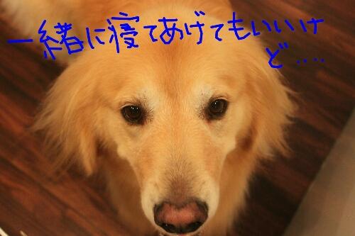 祝_b0130018_9251943.jpg