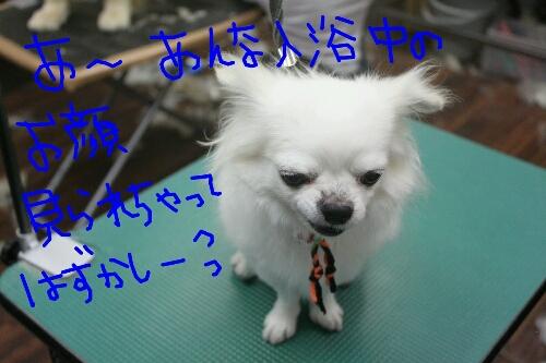 祝_b0130018_930188.jpg