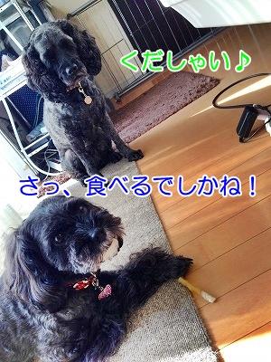 f0326925_20174205.jpg