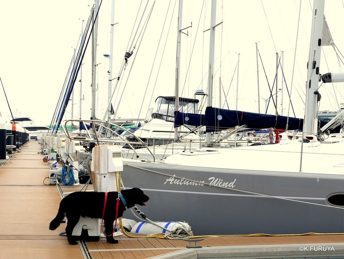 Sailing♪_a0092659_2058389.jpg