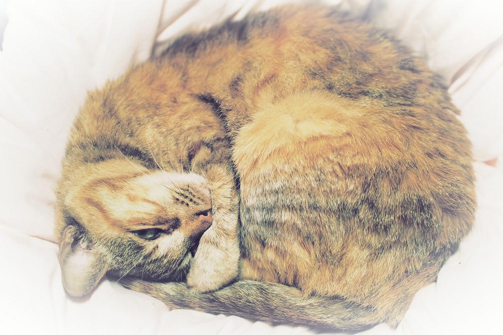 猫にゃん_f0021869_23484776.jpg