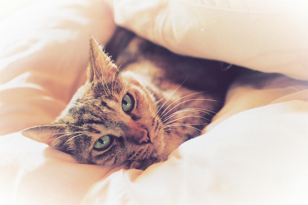 猫にゃん_f0021869_2348523.jpg