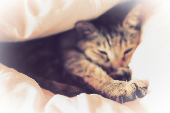 猫にゃん_f0021869_2349243.jpg