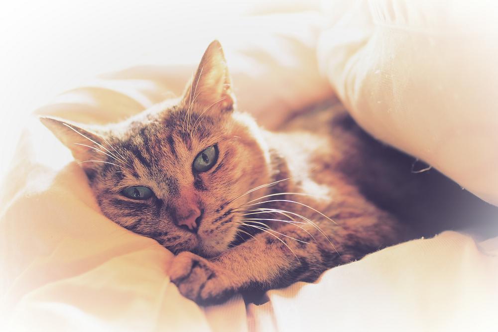 猫にゃん_f0021869_23495070.jpg