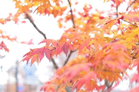 秋の装花 軽井沢万平ホテル様へ 紅葉のころ 錦秋_a0042928_19322287.jpg