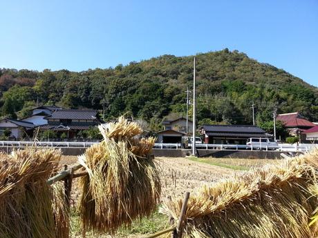 ジンセイデニカイメノ稲刈り☆_c0226146_13462044.jpg