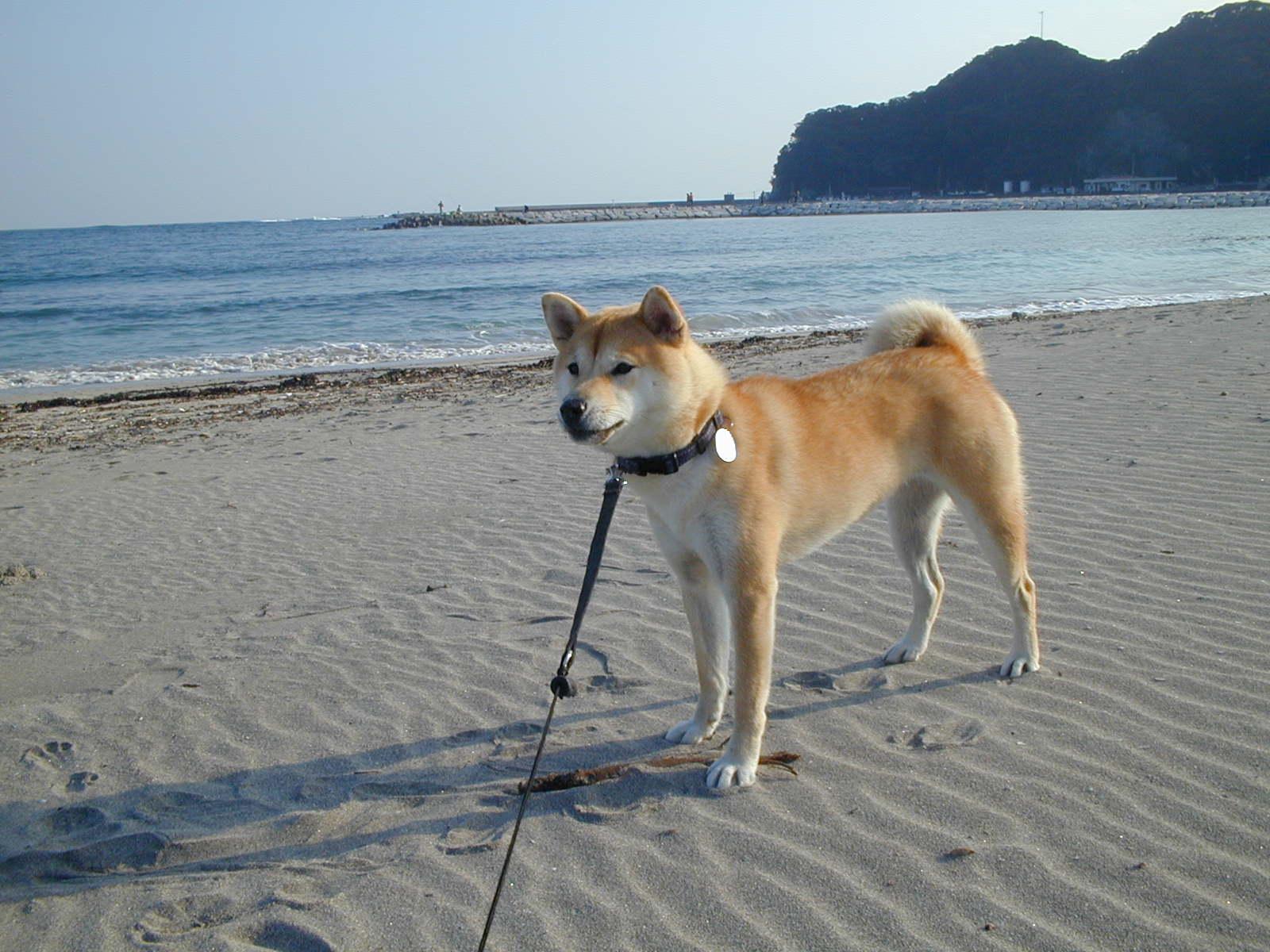 '14,11,4(火)12月の大歌舞伎と勝浦の海3景!_f0060461_16444233.jpg