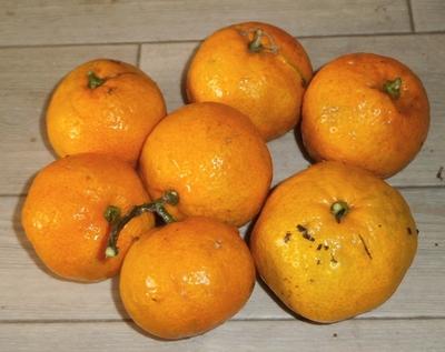 極早生蜜柑を11月に収穫して食べてみた _f0018078_18125558.jpg