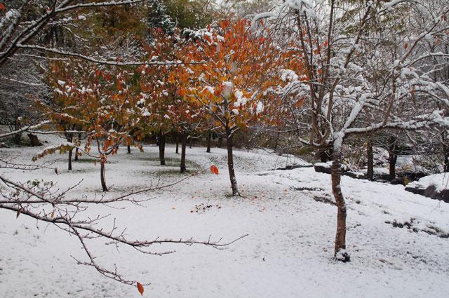 雪景色_d0162994_12381627.jpg