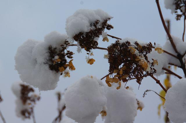 雪景色_d0162994_12394996.jpg