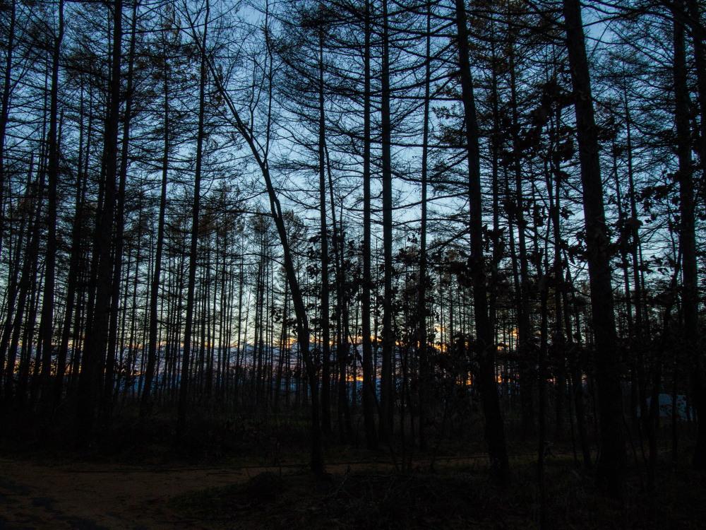 日が暮れるのが早くなり・・エゾリス君も大忙し・・冬も近いかな!_f0276498_23264951.jpg