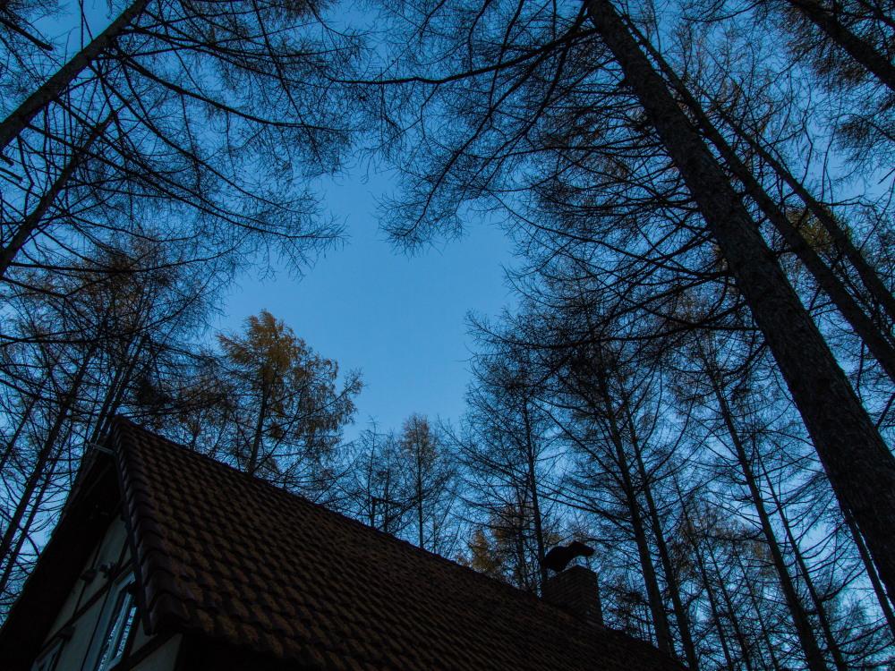 日が暮れるのが早くなり・・エゾリス君も大忙し・・冬も近いかな!_f0276498_23270968.jpg