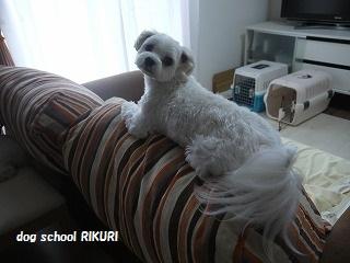 RIKURI幼稚園 - ルカくん編 -_a0284100_10205044.jpg