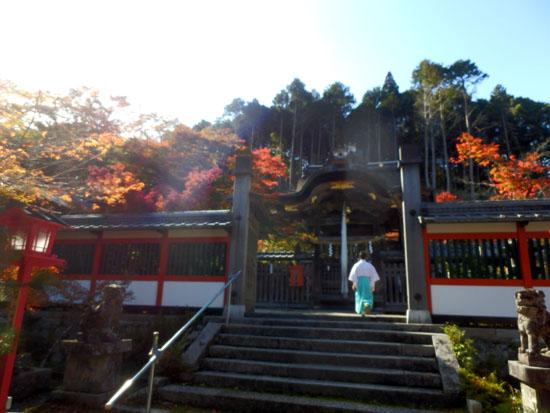 鍬山神社 もう見ごろ_e0048413_18213216.jpg