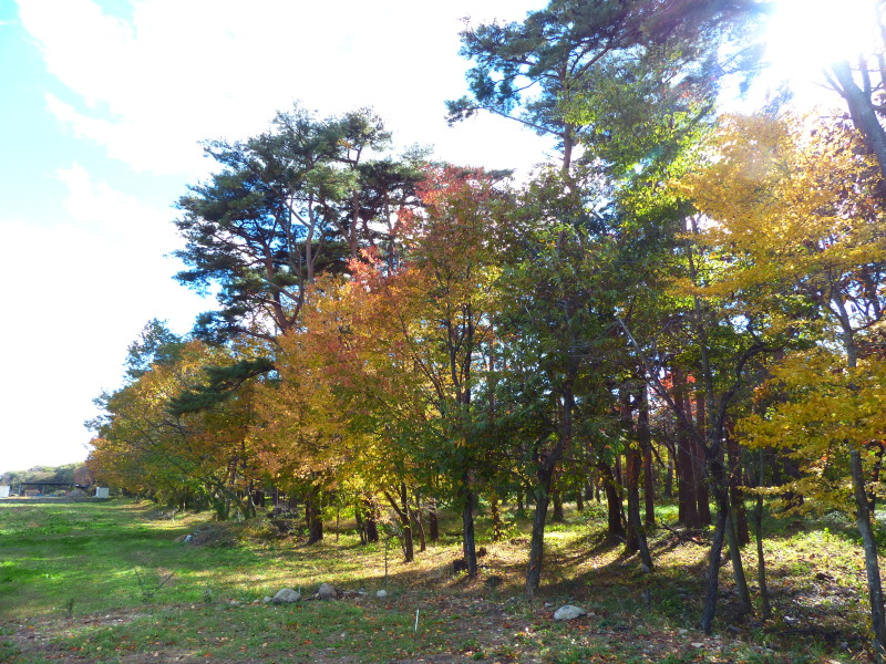 赤松林の紅葉と山野草_a0288621_21172830.jpg