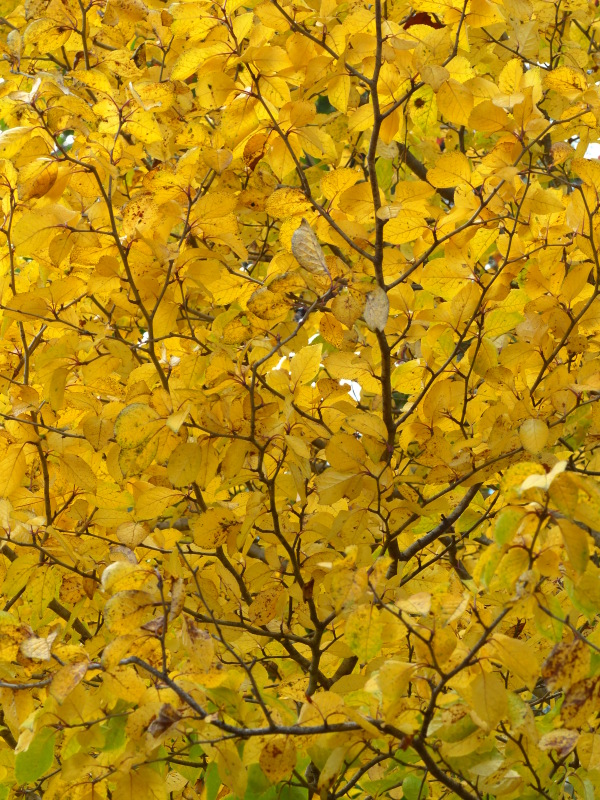 赤松林の紅葉と山野草_a0288621_21194786.jpg