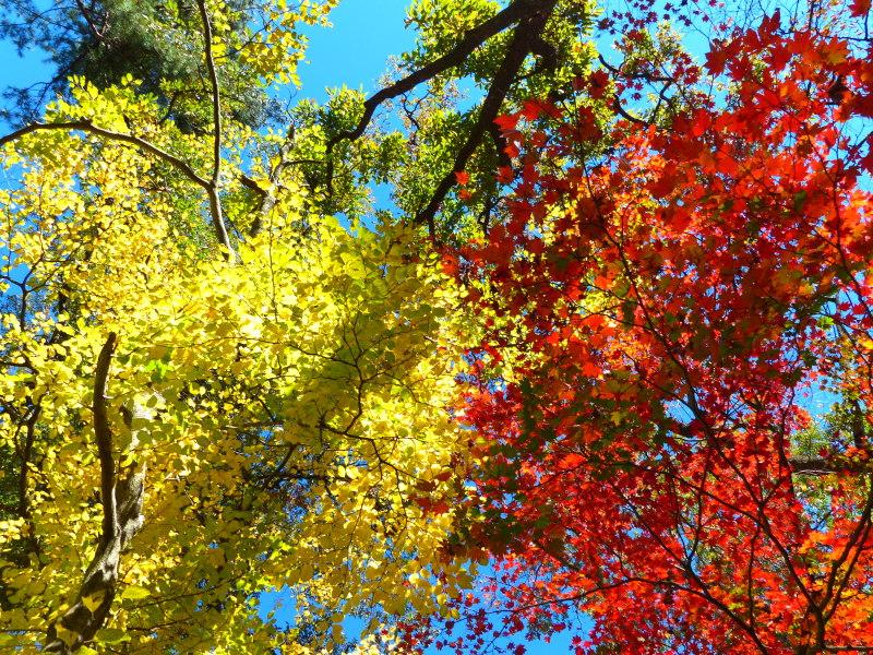 赤松林の紅葉と山野草_a0288621_21214922.jpg