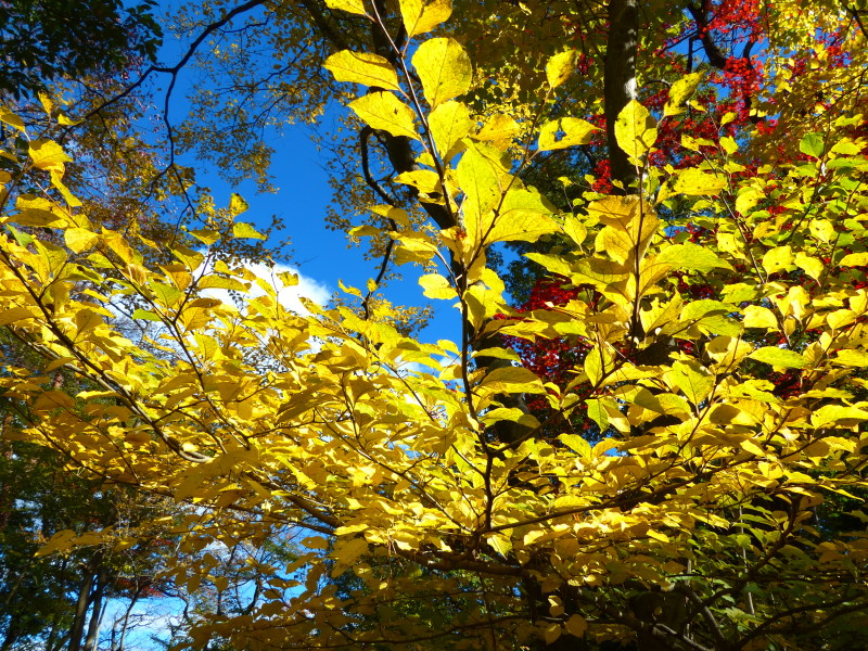 赤松林の紅葉と山野草_a0288621_21244426.jpg