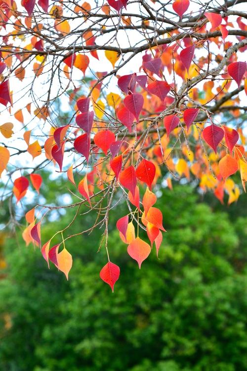 紅葉と鹿_d0285540_20242031.jpg