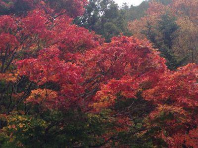 川内村の風景はいいね!_d0027486_12242872.jpg