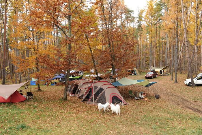 八ヶ岳キャンプ part1_a0049296_18362249.jpg